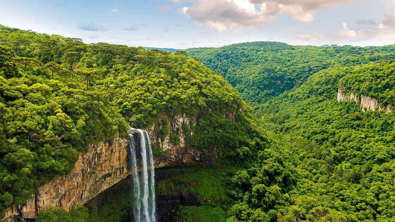 Un millón de especies en peligro de extinción y bosques tropicales bajo ataque