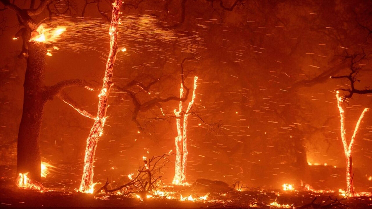 Cambio climático: 11.000 científicos exigen medidas urgentes para evitar una catástrofe